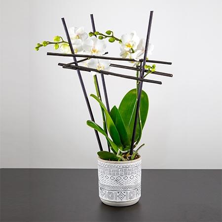 Composition d'Orchidée