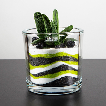 Plante sable plante grasse