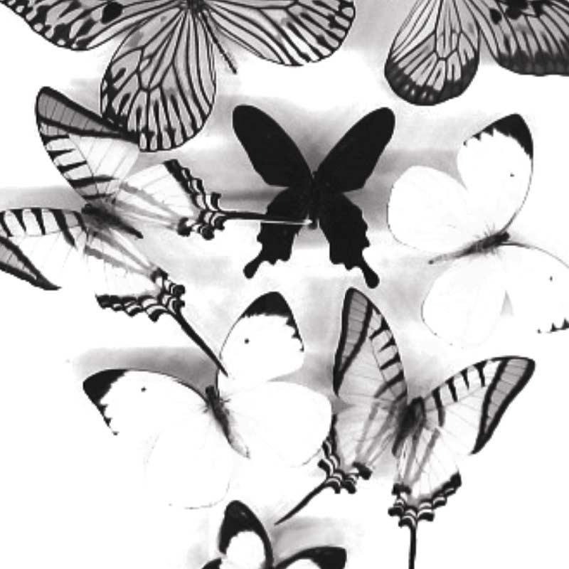 Carte message papillons