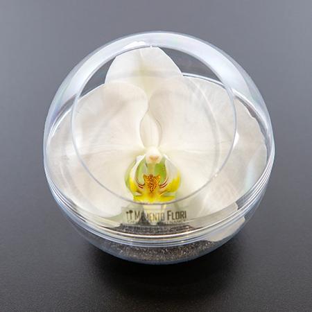 Bulle d'Orchidée