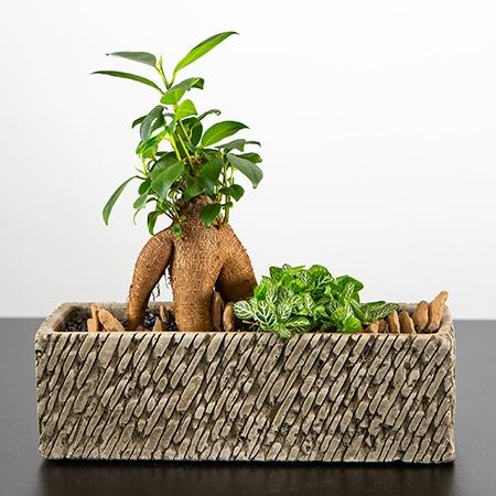 Composition mini-jardin de plantes