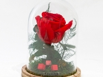 Cloche rose stabilisée