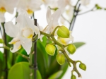 Vasque d'Orchidées